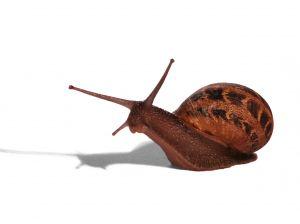1181452_snail